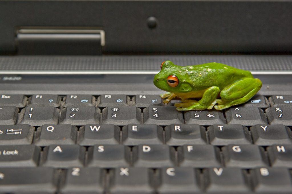 Frog on keyboard